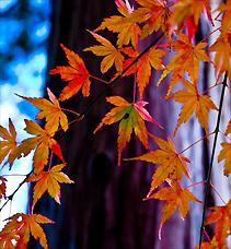秋 旬 果物